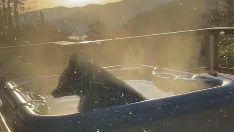 Orso in vasca idromassaggio