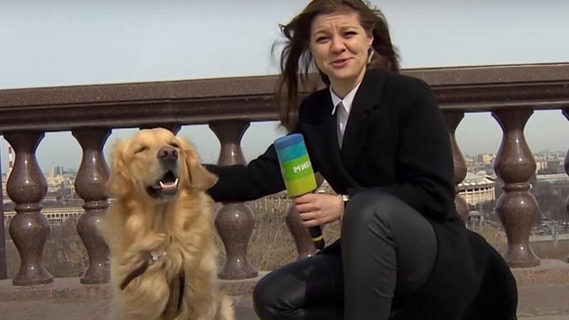 Giornalista e cane