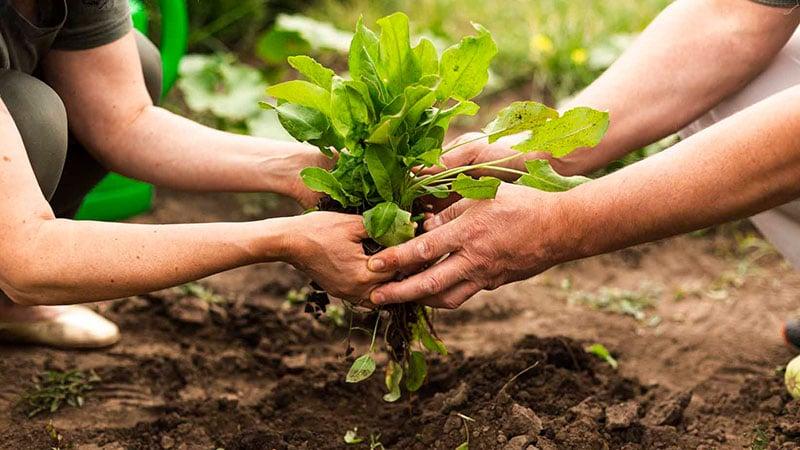 Agricoltura di comunità