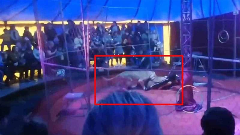 Leonessa Circo Russia