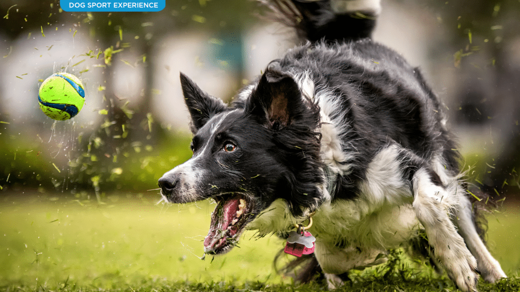 Dog Sport Experience