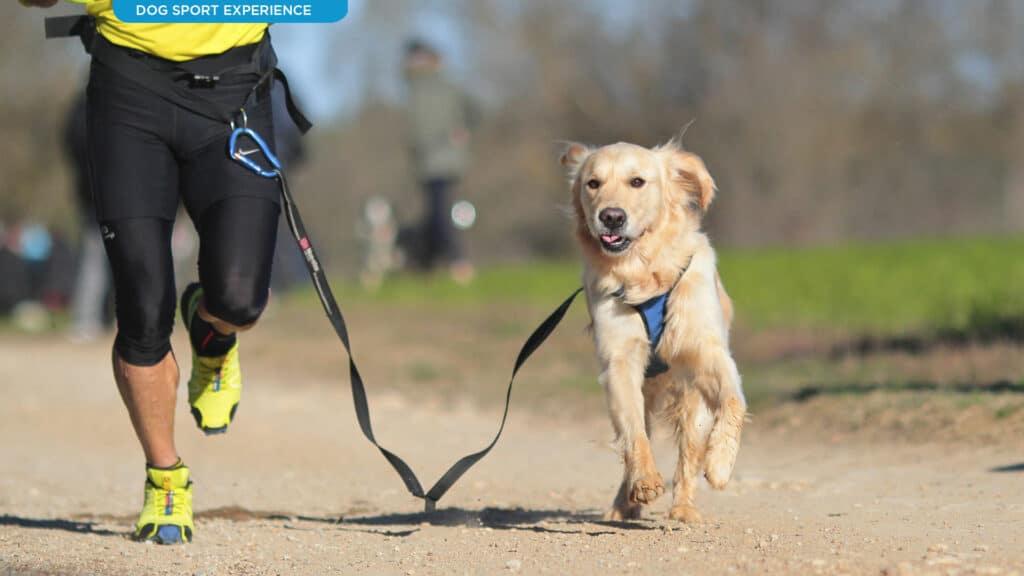 Sport col cane